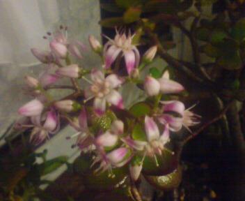 優しく咲いています!