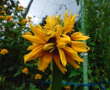 変わった花