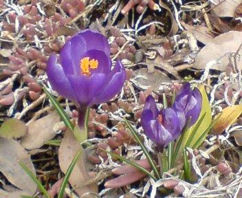 ★春一番☆