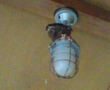 つばめの巣