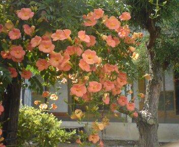 花が咲く(^O^)