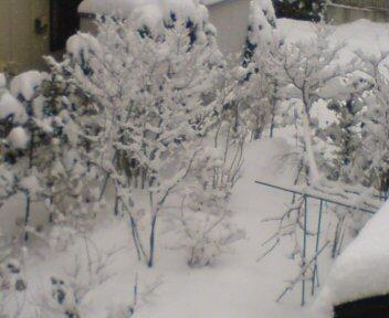 ドカ雪(☆o<br />  ☆)